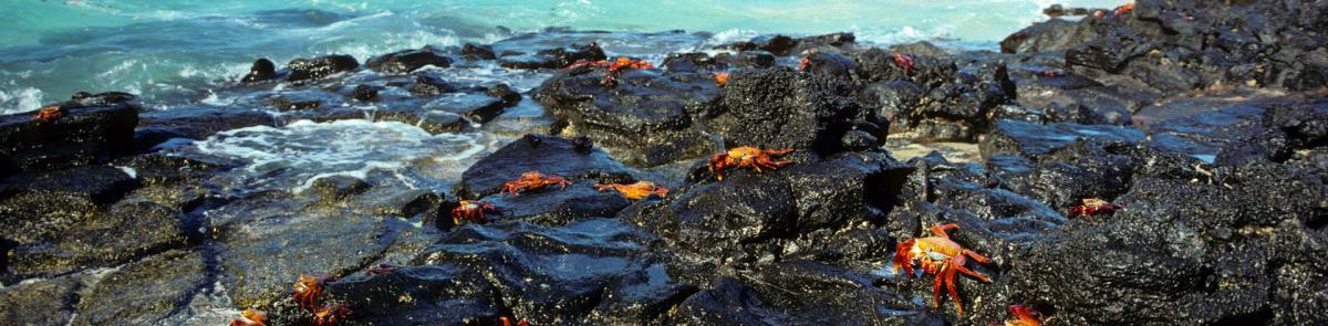 rocky ocean shoreline with crabs
