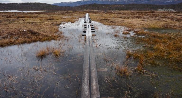 A boardwalk for traversing Sweden's Stordalen Mire sinks in the thawing landscape. Credit: Moira Hough